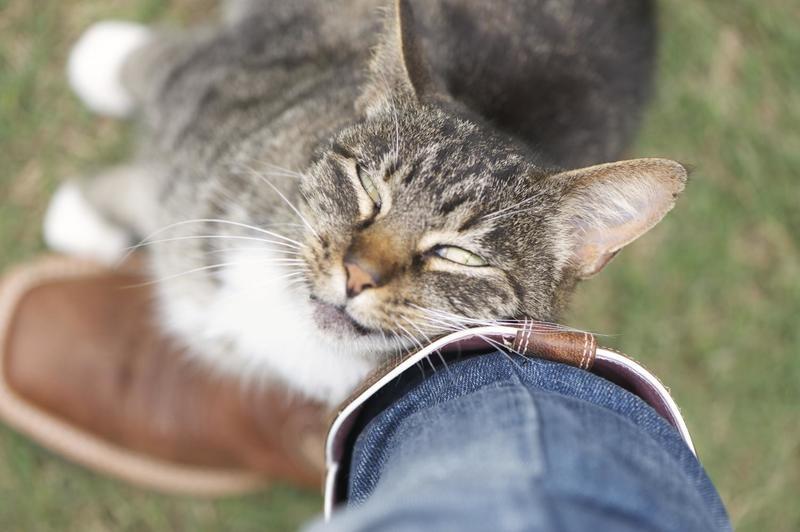 Почему кошки трутся об ноги людей?