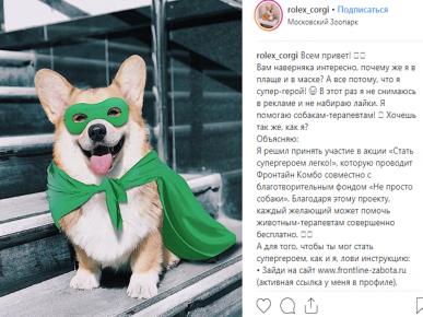 Корги-супергерой