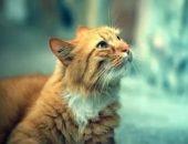 Кошка из Красноярска спасла своего хозяина от гибели, но сама не выжила