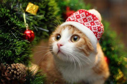 Кот в шапке с зимним узором