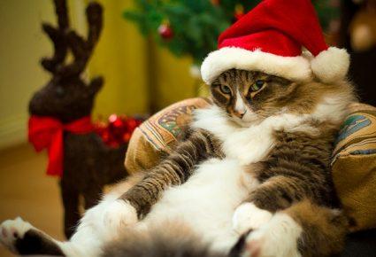 Кот сидит в новогодней шапке