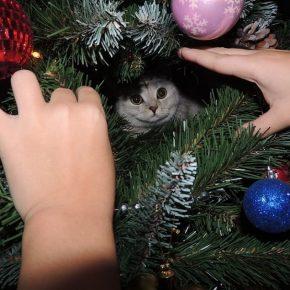 Кошка в ёлке