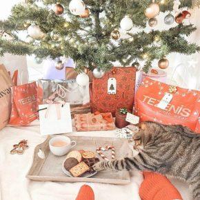Кот ворует печенье