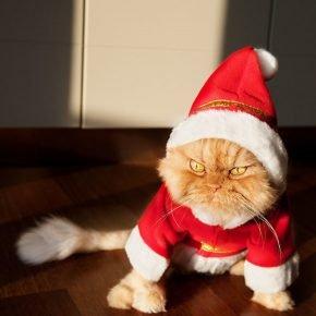 Кошка в новогоднем костюме
