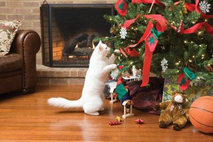 Кошка возле наряженной ёлки