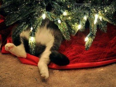 Кот под ёлкой