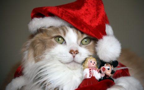 Кот в новогодней шапке с игрушками