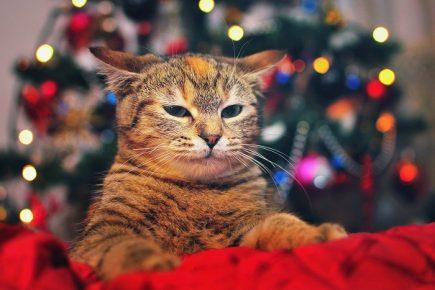 Кот на фоне ёлки