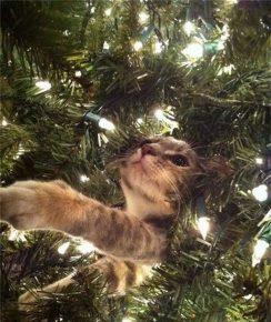 Кот застрял в ёлке