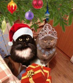 Коты в новогодних костюмах