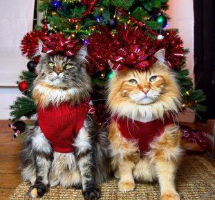 Коты с бантами на голове