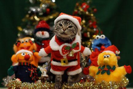 Кот с игрушками