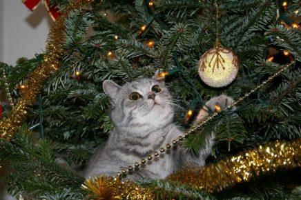 Кот смотрит на шарик