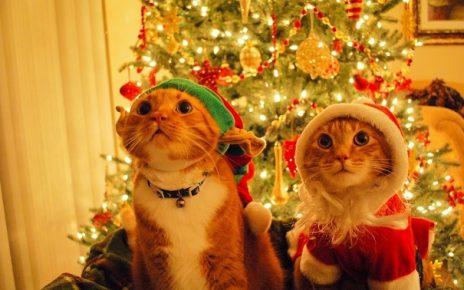 Коты в костюмах эльфа и Санты