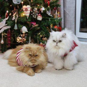 Коты в новогодних шарфах