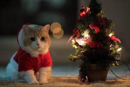 Кот рядом с ёлкой