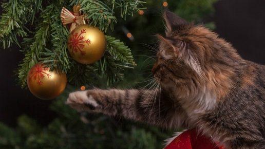 Кот тянется к шарику