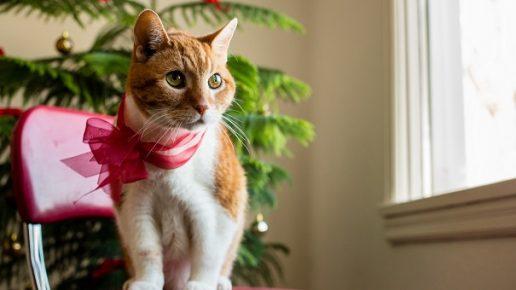 Кот с красным бантом