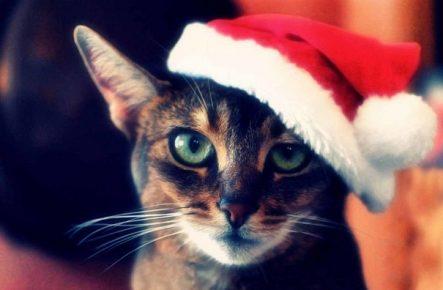 Кот в шапке Санты