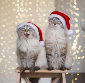Коты на табуретке
