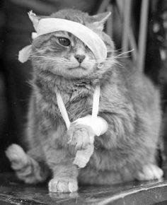 Травмированный кот