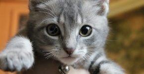 У котёнка обломаны усы