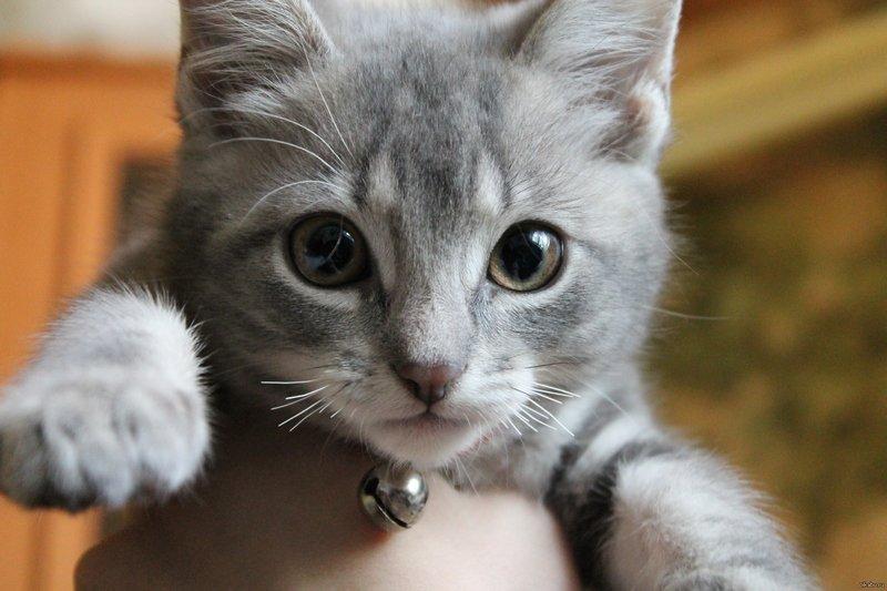 Почему ломаются усы у кошек