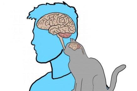 Мозг человека и кошки
