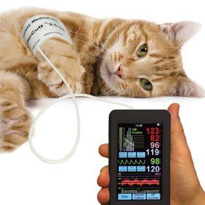 Измерение давления кошки