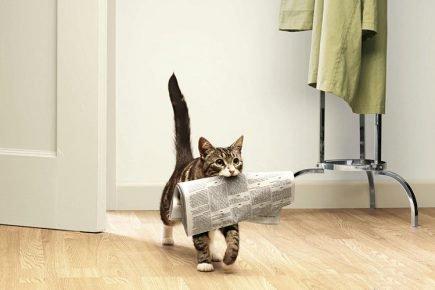 Кошка несёт газету