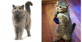 Кошки в позе