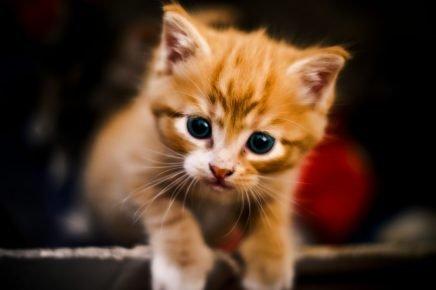 Забавный котёнок