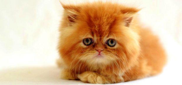 Кот рыжий грустный