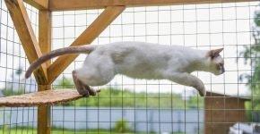 Кот в вольере