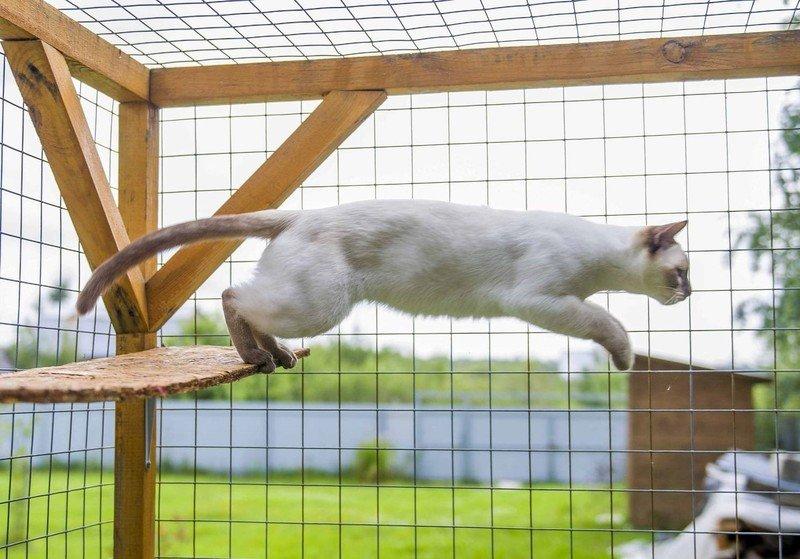 Вольер для кошек: как правильно сделать домашний манеж для квартиры своими руками? Особенности вольера-клетки для дачи, модели со стеклянной дверью