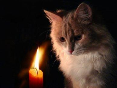 Кошка смотрит на свечу