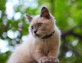 Кот с ошейником
