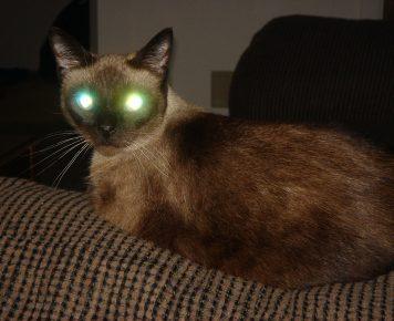 Глаза кота в темноте