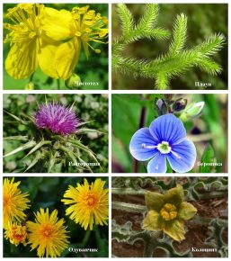 Лекарственные травы, экстракты которых содержатся в Ковертале