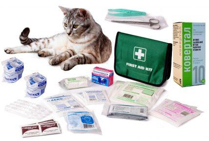 Кошка, аптечка и препараты