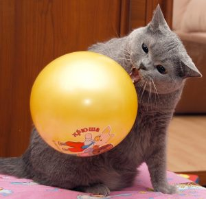 Кошка с воздушным шариком