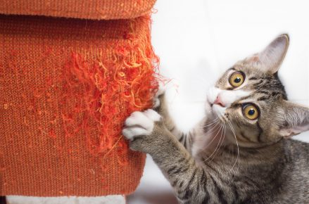 Кот дерёт мебель