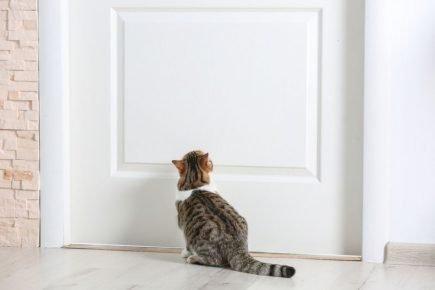 Кот возле двери