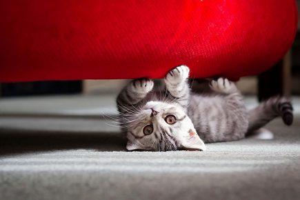 Котёнок точит когти о диван
