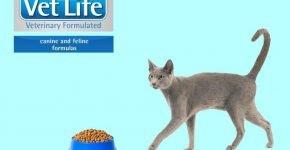 Русская голубая кошка и Vet Life