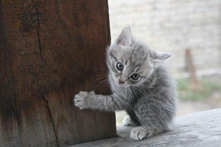 Котёнок точит коготки