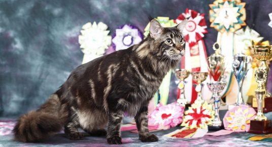 Кот с медалями
