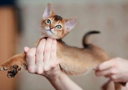 Котёнок в руках