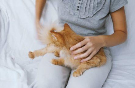 Кот на коленях