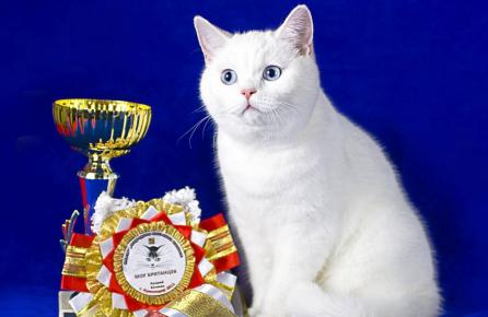 Кот-чемпион